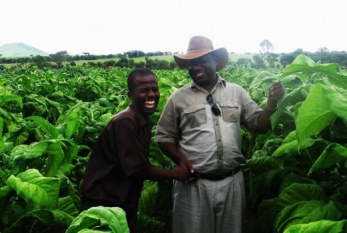 Brasil: Monsanto intenta frenar la demanda de 5 millones de agricultores