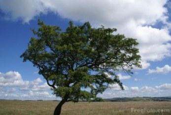 La importancia de la educación ambiental