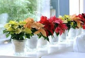 Tener plantas en la oficina