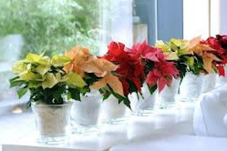 Tener plantas en la oficina empresalud for Plantas para oficina