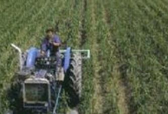 Dueña de campo debe indemnizar a trabajador