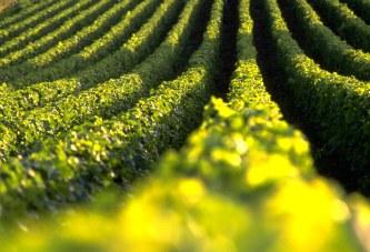 Argentina: Centenares de casos de explotación laboral agraria