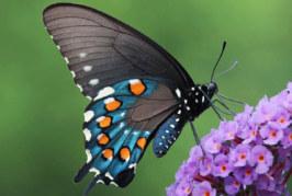 """Simple del lunes: """"La felicidad es como una mariposa"""""""