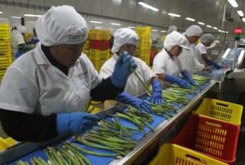 Perú: Piden eliminar regímenes laborales precarios en los sectores textil y agrario