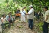 Perú: Promueven manejo integrado de plagas y enfermedades en el cultivo de cacao